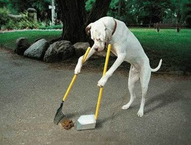 Image result for Why Do Dogs Eat Poop